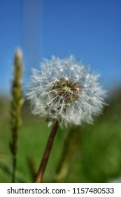 apon a dandilion seed