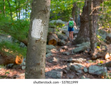 Appalachian Trail Blaze with Hiker in Background climbing rocks