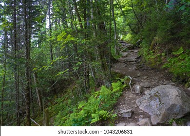 The Appalachian Trail. Path in the woods. Sweat heifer creek trail in Great Smoky Mountains National Park in Tennessee.