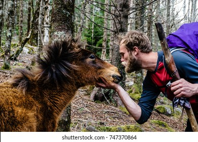 THE APPALACHIAN TRAIL, VIRGINIA - CIRCA APRIL 2015 - An Appalachian Trail Thru-Hiker says hello to a wild pony in Grayson Highlands State Park in Virginia in late April 2015.