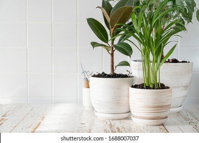 Appartment gardening - houseplants in white pots on white background