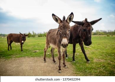 Appealing wild donkeys