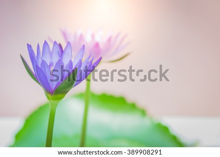 Appearance purple lotus flower beautiful symbol stock photo edit the appearance of a purple lotus flower is a beautiful symbol of buddhism mightylinksfo