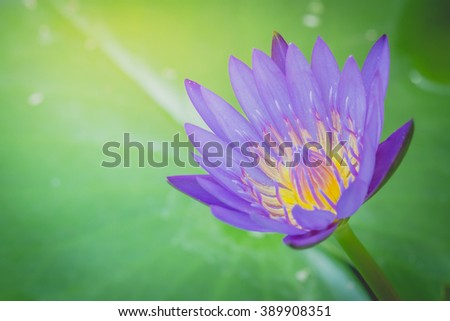 Icon lotus flower shutterstock picturesque buddhist www the appearance of a purple lotus flower is a beautiful symbol of buddhism jpg 450x320 icon mightylinksfo