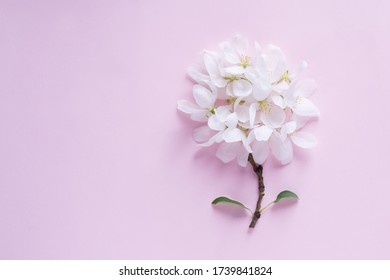 Apple blossom flower buds background. Flat lay, top view, floral spring concept.