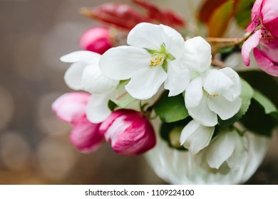 Apple Blossoming Pink and White Flowers. Spring bouquet of apple tree flowers. Spring floral background