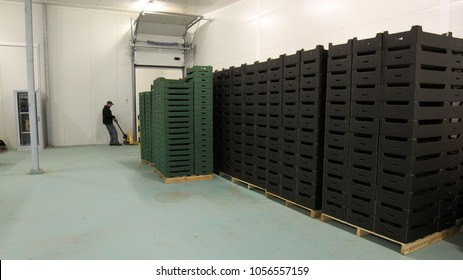 Apple boxes in a fruit processing plant, warehouse , 08.2014, lubelskie, Poland