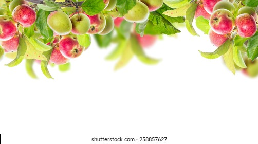 Apple branch with apples and leaves, banner for website, isolated on white background