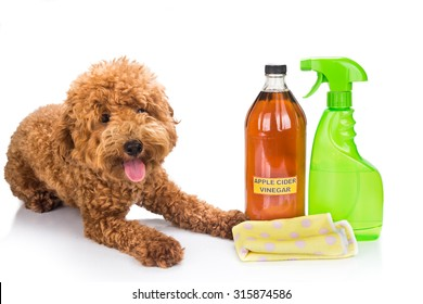 Apple cider vinegar effective as natural flea repellent for pets