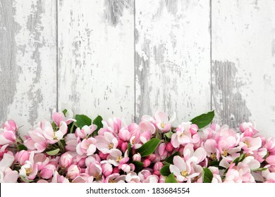 Apple flower blossom forming an abstract border over old distressed wooden background.