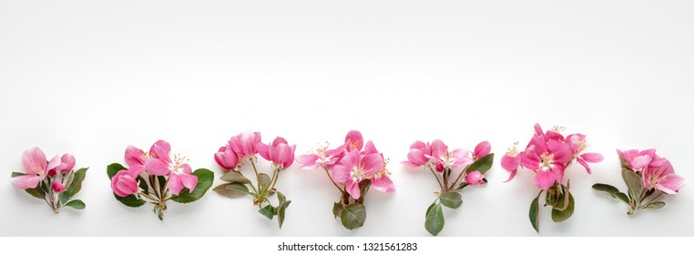 Apple flowers flatlay on white background