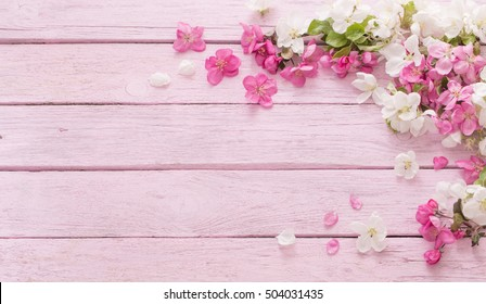 apple flowers on pink wooden background