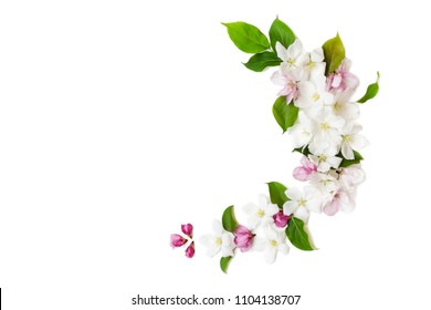 Apple flowers on a white background, top view