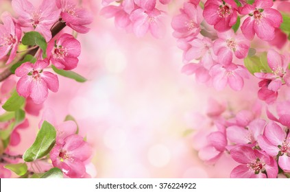 Apple flowers,Spring blossom with copy space.