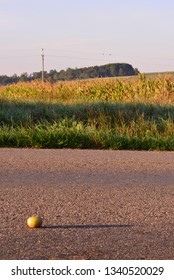 An apple on the road in morning sunrise sunshine.