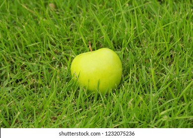 apple on a rope on a wire on a green background, red apples in a vase