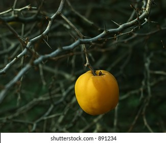 apple on a spiked tree
