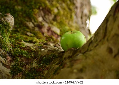 Apple on a tree