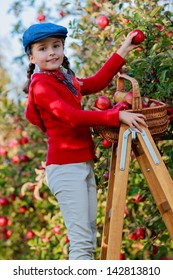 Apple orchard - Young girl picking red apples into the basket.