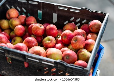 Apple store with many fruit in plastic crate box during autumn fall season in farmer's market with pink and red color