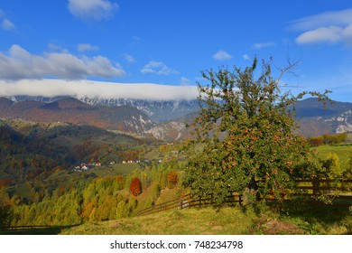 apple tree in autumn landscape