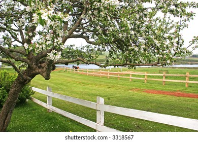 An apple tree flowering in the springtime countryside.