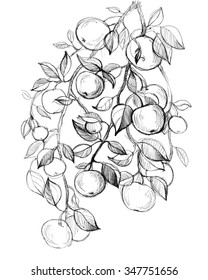 Apple tree fruits, leaves. Hand drawn amazing artwork. Love bohemia concept for textile fashion design, wedding invitation, card, ticket, boutique label.  Black and white. Coloring book page for adult
