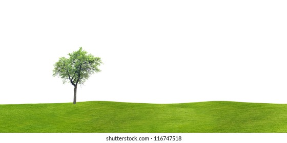 Apple tree on a grassy hill against a white background