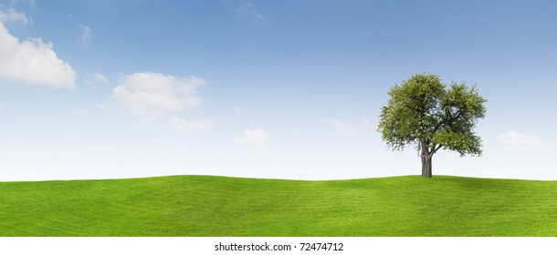 Apple tree on a meadow