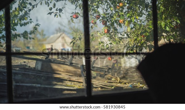apple tree outside shot through a window, situated in a dark room
