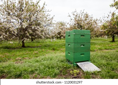 At the apple trees there are bees box for spraying the flowers