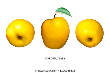 Apple Yellow Golden, Italy isolated on white background. Three points of view and text name below. Illustration of golden yellow apple coming from Italy.