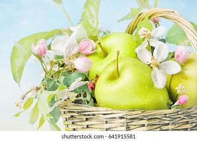 apples in a basket on a defocused background