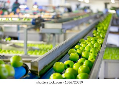 Apples Being Graded In Fruit Processing And Packaging Plant