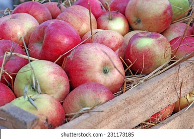 Apples closeup on straw in a wooden box closeup