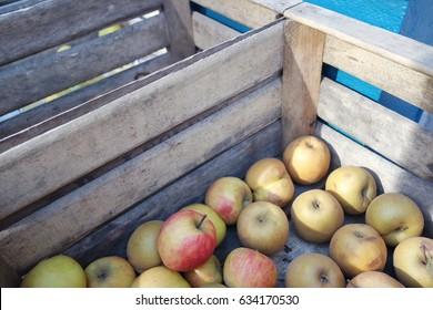 Apples at farmer market
