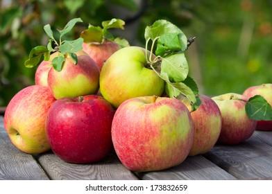 Apples in a garden
