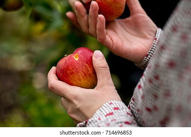 the apples in the hands of the girls