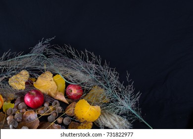 Apples, leaves and heather against a black background