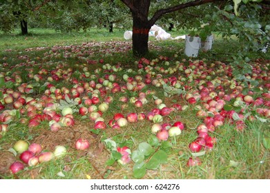 Apples on the floor