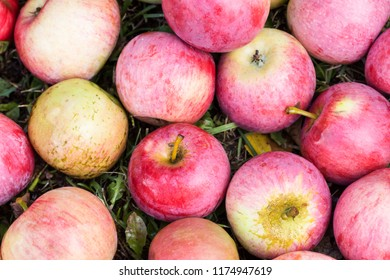 Apples on the grass, fruit background, food and agriculture concept