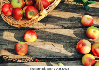 Apples on old shabby wooden planks. Apple picking, autumn harvest concept. Horticulture, orchard, gardening, august, basket, board