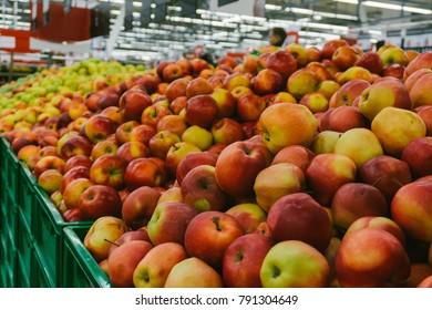 Apples on supermarket shelves