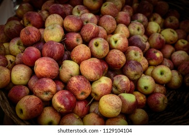 Apples, scientific name Malus domestica Bork, of Caucasian origin and very cultivated in Brazil