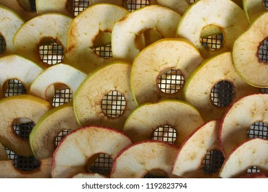 Apples are sliced and placedon the grid of the electric dryer