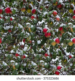 Apples in the snow seamless texture