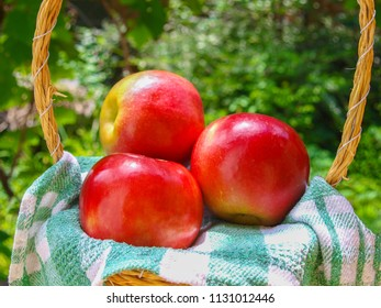 Apples in a wicker basket, on checkered kitchen towel. In the background green blur bokeh.