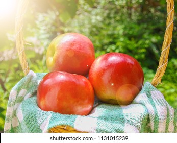Apples in a wicker basket, on checkered kitchen towel, with sunshine. In the background green blur bokeh.