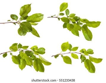 apple-tree branch with green leaves. Isolated on white background. Set