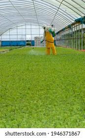 application de produits chimiques agricoles en serre avec combinaison de sécurité